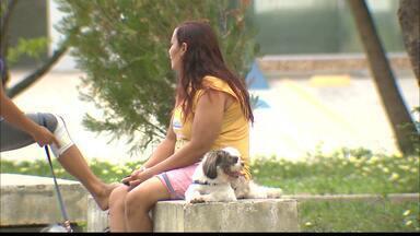 ONG protetora de animais denuncia: aumentou o número de roubo de cães em João Pessoa - Um dos casos foi em Manaíra e a família, dona do animal, está inconsolável. A polícia confirmou o aumento desses roubos e está investigando.