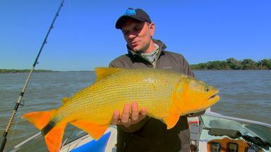 Pesca de dourado - Na Argentina, o desafio é fisgar o rei dos rios.