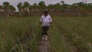 Usina em Coruripe aposta na adubação líquida para minimizar efeitos da seca - Irrigação também está sendo realizada.
