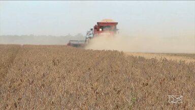 No sul do MA, produtores rurais recuperam estradas para escoar safra de grãos - No sul do MA, produtores rurais recuperam estradas para escoar safra de grãos