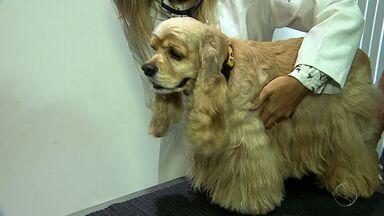 Comportamento de cães pode indicar doença grave e silenciosa - Comportamento de cães pode indicar doença grave e silenciosa.