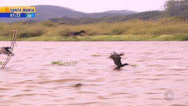 Reserva Biológica do Lami abriga espécies ameaçadas - Urbanização próxima à reserva traz perigos aos animais.