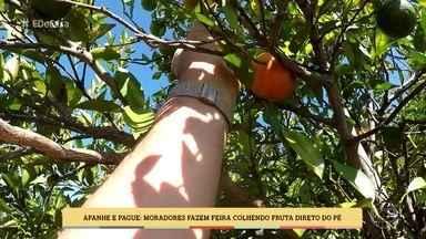 Zeca Camargo conhece lugar onde se compra fruta direto do pé - Casal aproveitou dificuldade financeira para criar novo negócio
