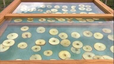 Secadora de frutas funciona com energia solar - Veja no vídeo os detalhes da estrutura da secadora. O aparelho pode secar maça, banana, abacaxi e outras frutas.