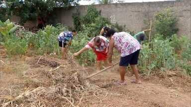 Agricultoras urbanas de Montes Claros, aprenderam a fazer um composto orgânico - Manter uma produção orgânica exige uma série de cuidados, inclusive com a adubação.