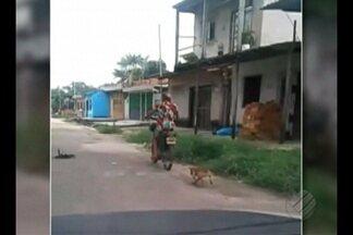 Dema recebe 20 denúncias diárias de maus tratos de animais em Belém - Na última segunda-feira (13), duas pessoas foram autuadas por maus tratos
