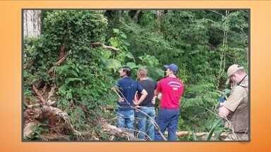 Duas pessoas morrem atingidas por galhos de árvore no Oeste do estado - Duas pessoas morrem atingidas por galhos de árvore no Oeste do estado