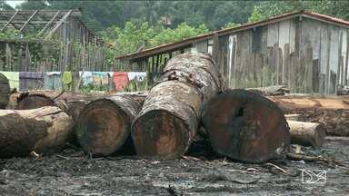PF realiza operação contra extração ilegal de madeira no Maranhão - PF realiza operação contra extração ilegal de madeira no Maranhão