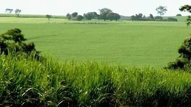 Começa safra da cana-de-açúcar no Noroeste Paulista - O clima fez bem para os canaviais do Noroeste Paulista. Choveu na medida certa e as plantações estão bonitas. Mas o setor está preocupado com as previsões para os próximos meses. A possibilidade de longos períodos de estiagem pode resultar em prejuízos.