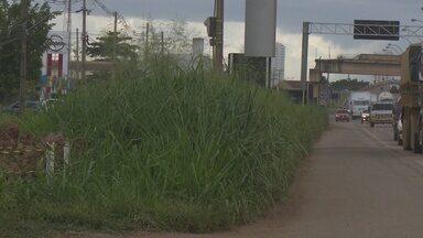 Motoristas reclamam da falta de manutenção na BR-364 - O mato alto esconde a sinalização na rodovia.