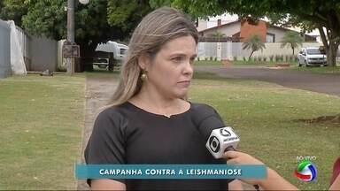 Secretaria de Saúde de Ponta Porã faz campanha contra leishmaniose - A leishmaniose é uma doença grave que pode matar. Agentes de saúde visitam residências.