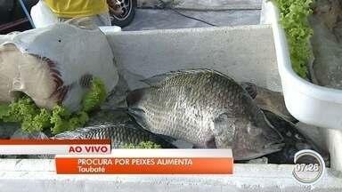 Comerciantes esperam aumentar vendas de peixes na semana santa - Expectativa é aumentar vendas em até 50%.