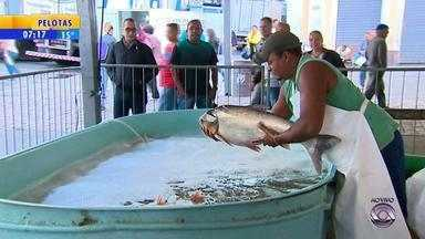 Porto Alegre e Santa Maria têm Feira do Peixe - Consumo de peixe aumenta durante a Semana Santa.