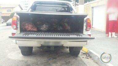 Dupla é presa por transportar 200 quilos de carne ilegalmente em São José - Eles vão ser indiciados por crime contra consumidor.