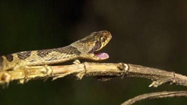 A rica biodiversidade da Serra do Cipó - Em Minas Gerais, anfíbios raros e flagrantes únicos.