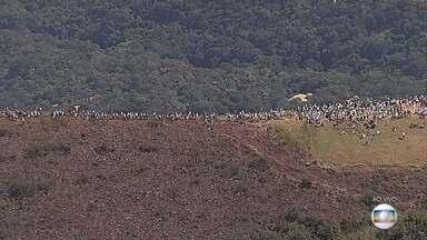 Centenas de pessoas 'abraçam' a Serra da Moeda, em Minas Gerais - Ato simbólico busca alertar para a importância da preservação do local.