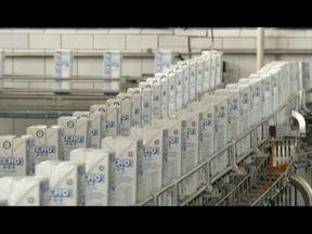 Conheça o processo de fabricação do leite - Bebida está sempre presente na mesa do brasileiro, especialmente no café.