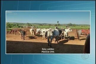 Polícia recupera gado furtado e prende quatro na zona rural de Prata - Com o grupo foram encontrados dezenas de armas, munições e cabeças de gado.