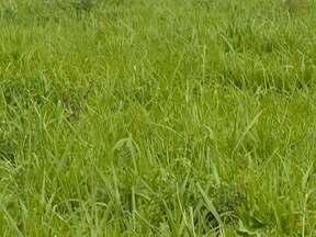 Agricultura e pecuária são utilizadas para recuperar áreas degradadas do solo - Medida gera benefício e reduz os custos de produção.