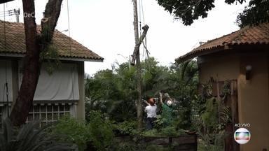 Saiba a quem recorrer quando árvores ameaçam cair ou abalar estruturas - Mesmo que a árvore esteja em seu quintal ou calçada, você deve entrar em contato com os órgãos responsáveis do seu município. Especialistas explicam como agir nestes casos