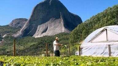 Pedra Azul, no ES, tem produção de café arábica sustentável - Café ajudou na restauração da área.