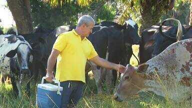 Momento do Agronegócio destaca a vacinação de animais contra a febre aftosa - Momento do Agronegócio destaca a vacinação de animais contra a febre aftosa
