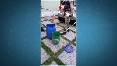 Polícia ambiental apreende sete cobras e um saruê em vários locais do DF - Polícia ambiental apreende sete cobras e um saruê em vários locais do DF só nesta segunda (1)