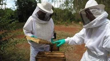 Apicultor espalha colmeias em floresta a partir de dados de GPS - Usando bem a tecnologia dá para produzir melhor em várias áreas. Nos apiários instalados em plantações de eucalipto, em Capão Bonito (SP), as colmeias são distribuídas na floresta a partir de um levantamento feito com GPS.