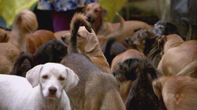 Promotoria pede política pública para animais em Itanhaém - Problema é alvo de ação civil pública contra a Prefeitura.