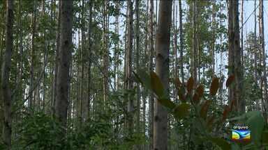STF mantém proibição de expansão de desmatamento pela Suzano - STF mantém proibição de expansão de desmatamento pela Suzano