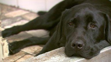 Projeto cão-guia completa 16 anos - O projeto ficou conhecido em todo o país e já treinou quase 50 cães.