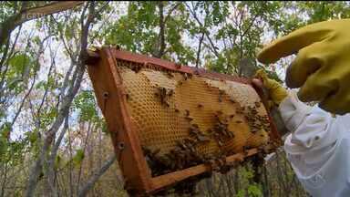 Produção de mel em Moreilândia é afetada pela seca - Alguns alpicutores tiveram que abandonar a profissão