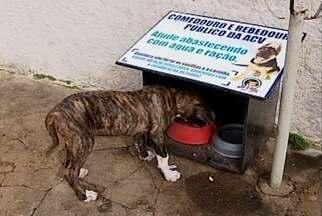 Projeto beneficente fornece água e comida a cães de rua em Ibiá - Trabalho solidário é iniciativa de moradores.