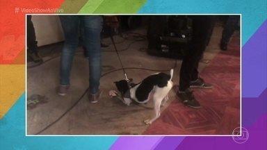 Cãozinho Sherlock, de 'Pega Pega', se diverte nos bastidores da novela - Ele não queria soltar uma flor