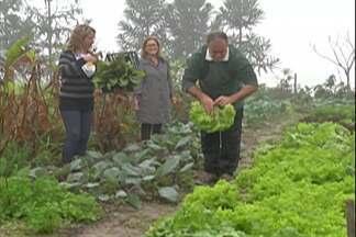 Turismo rural atrai visitantes em Guararema - Turistas podem colher verduras e fazer terapias alternativas nas propriedades.