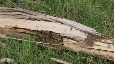 Prefeitura de Campos, RJ, realiza trabalho para conter infestação de cupins - Famílias tiveram que deixar casa em função dos insetos.