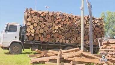 Empresas que vendiam madeira de modo ilegal são fechadas em Rondônia - Segundo órgão, empresas emitiam notas falsas.