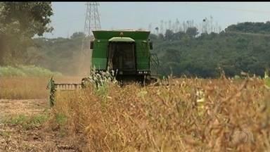 Vazio sanitário impede plantio de soja em Goiás - Nos próximos três meses, produtores não podem semear ou manter a planta viva no campo.