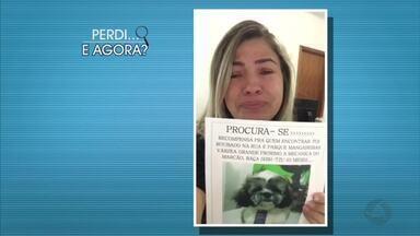 Achados e Perdidos: Márcia perdeu cachorrinho - Achados e Perdidos: Márcia perdeu cachorrinho.