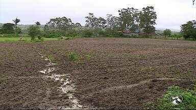 Chuvam mudam cenário na zona rural de Caruaru - Falta de água era a principal preocupação dos agricultores