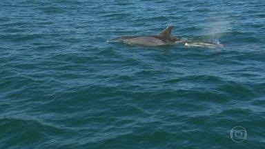 O RJTV pega uma carona com pesquisadores, em busca de golfinhos, na Baía de Guanabara - Esse ano, os golfinhos estão mais perto da costa e chegam a se aproximar das praias do Rio.
