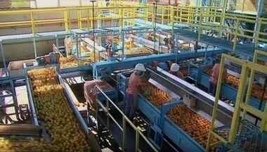 Exportações de laranja têm pior desempenho desde 1991 - Na safra 2016-2017 foram comercializadas 894 mil toneladas da fruta: 17% menos que na safra anterior. Na União Europeia, principal mercado consumidor, o volume vendido teve queda de 23%.