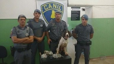 Polícia apreende dois quilos de drogas com ajuda de cão farejador em Ribeirão - O faro do Aquiles levou a polícia a prender um jovem de 19 anos.