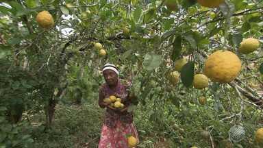 Agricultores que não derrubam árvores recebem dinheiro em Ibirapitanga; veja na Previsão - Saiba como fica o tempo no estado.