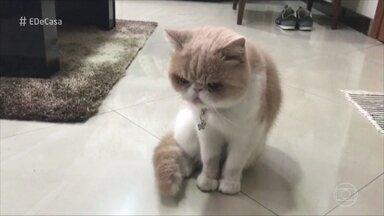 """O que os gatos fazem quando os donos não estão perto? Confira! - Gato fujão: """"Uruca"""" ficou preso entre dois prédios depois de escapar pelo terraço"""