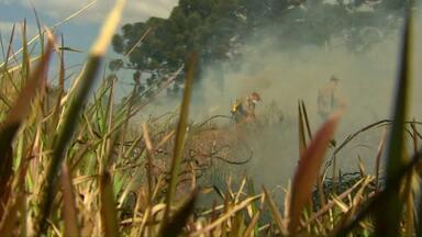 Gasto dos bombeiros para apagar incêndios ambientais pode chegar a R$ 1.300 por dia - Os incêndios também podem atrapalhar o atendimento de ocorrências mais graves.