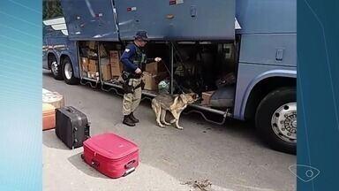 Mulher é presa com 20 kg de maconha em ônibus que seguia de SP ao ES - Cadela da PRF encontrou a droga no bagageiro do ônibus e a suspeita foi levada para a Polícia Federal, em Vila Velha.