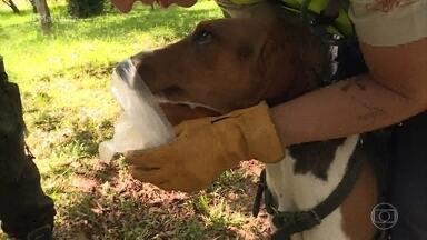 Mais você acompanha o treinamento de dois cães farejadores em São Paulo - Dificuldade aumenta gradativamente para simular situações reais de resgate