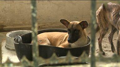 Voluntários doam cochos para animais não passar frio nesse inverno - Voluntários se mobilizaram e conseguiram lugares quentinhos para os cachorros do centro de zoonoses dormirem.