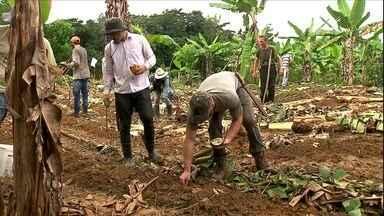 Método garante produção e recupera áreas degradadas - Conheça o criador da agricultura sintóprica: Ernst Gotsch.